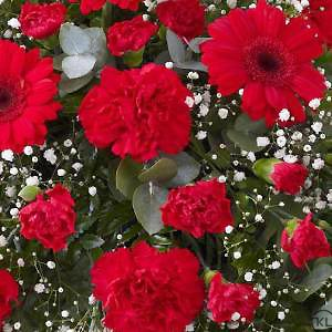 Carnation-and-Germini-Teardrop-Spray-Red-3-Funeral-Flowers-London-300x300