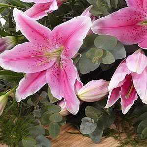 Lily-Casket-Spray-Pink-4ft-3-Funeral-Flowers-London-300x300