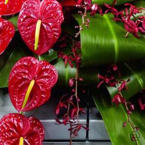 Rose-Orchid-and-Anthurium-Casket-Spray-3-Funeral-Flowers-London-300x300